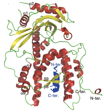 Crystal structure of two bound subunits, PA and PB1, of influenza virus RNA polymerase