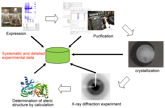 Crystallographic analysis of X-ray diffraction data