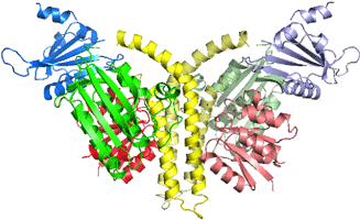 Fig. 2 Structure of complex of histidine kinase and response regulator.