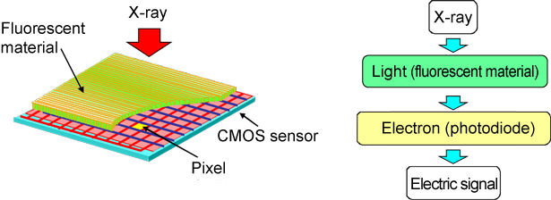Fig. 3	Schematic of X-ray CMOS detector (left) and principle of X-ray detection (right)