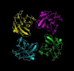 Fig. 2  Structure of TDH tetramer (X-ray crystal structure)