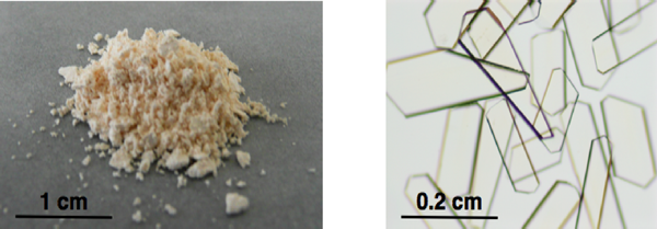 Fig. 1 Crystal powder (left) and single crystals (right) of porous coordination polymer successfully developed in this research