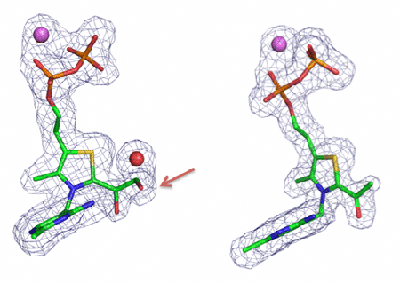 Fig. 4 Structures of dihydroxyethyl TPP intermediate (left) and acetyl TPP intermediate (right)