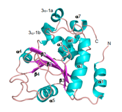 Fig.2. Steric structure of OspI