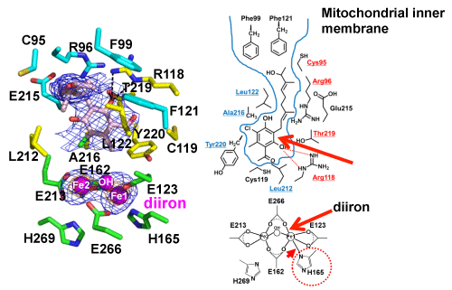 Fig. 3	Inhibitor binding region of TAO.