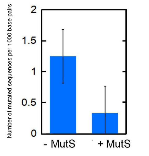 Fig. 5	Suppression of replacement with mutated sequence by MutS