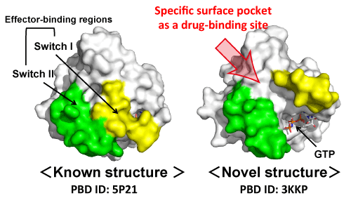 Fig. 2	Comparison between the newly solved and already-known structures of Ras used in this research