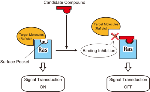 Fig. 3 Inhibitory mechanism of the selected compounds on Ras-mediated cancer signaling