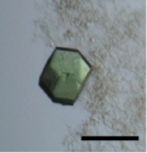 Fig. 2		Crystal of Hfq-catalase complex