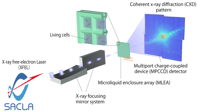 Fig. 1	Schematic of pulsed coherent X-ray solution scattering (PCXSS)
