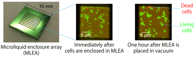 Fig. 2	Experimental results revealing that a microliquid enclosure array (MLEA) can maintain living cells in the natural state
