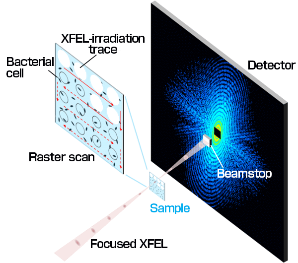 Fig. 1	CXDI experiment using XFEL as light source