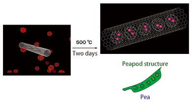 Fig. 3	Carbon nanotube takes in fullerenes.  This looks like a pea in a peapod.