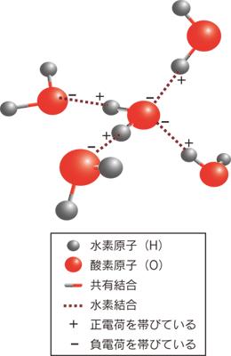 図3.水の4つの水素結合の模式図